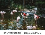 Pink Flamingo Resting In The...