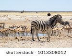 zebra and antelope at the... | Shutterstock . vector #1013308012