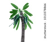 Small photo of Pachypodium palm decorative on white background isolation
