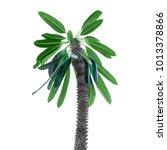 Small photo of Pachypodium palm decorative on white background isolation