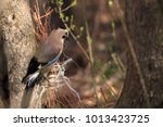 jay builds a nest of rope  the... | Shutterstock . vector #1013423725