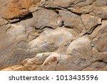 multi colored stone texture.... | Shutterstock . vector #1013435596
