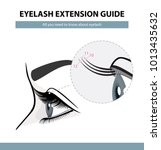 eyelash extension guide.... | Shutterstock .eps vector #1013435632