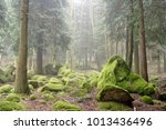 Rocks Covered By Green Moss In...