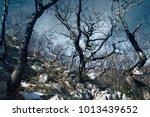 mountain oak  durmast  oak... | Shutterstock . vector #1013439652