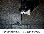 Cat Near A Dead Bird Just...