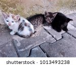 Stock photo three homeless kittens on street three little tabby and spotted kittens lying outdoor white three 1013493238