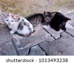 Stock photo three homeless kittens on street three little tabby calico tortoiseshell sad kittens lying 1013493238