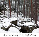 photo of a beautiful coniferous ... | Shutterstock . vector #1013555956