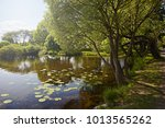spring fresh forest  by the...   Shutterstock . vector #1013565262