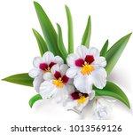 orchid flowers miltoniopsis... | Shutterstock .eps vector #1013569126
