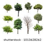 Collection Trees Isolated White Background - Fine Art prints