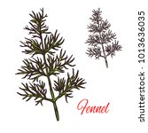 fennel seasoning spice herb... | Shutterstock .eps vector #1013636035