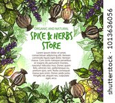 spice and herbs seasonings and...   Shutterstock .eps vector #1013636056