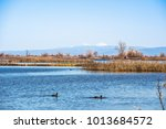 restored ponds and marshes in... | Shutterstock . vector #1013684572
