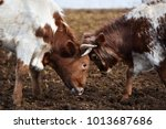bull and fierce | Shutterstock . vector #1013687686