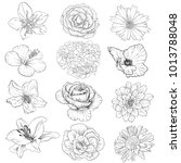 set of vector drawing flowers ... | Shutterstock .eps vector #1013788048