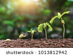 plant seeding growing step with ... | Shutterstock . vector #1013812942