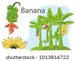 banana  food  thai | Shutterstock .eps vector #1013816722