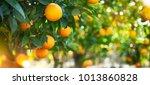 orange garden  summer background | Shutterstock . vector #1013860828