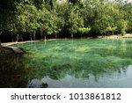 emerald pool krabi thailand.... | Shutterstock . vector #1013861812
