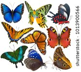 butterfly vector colorful... | Shutterstock .eps vector #1013900566