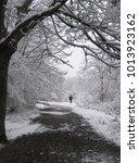 frozen woods in a rural area   Shutterstock . vector #1013923162