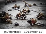 macro photo of dead  bees on a... | Shutterstock . vector #1013958412
