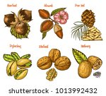 herbs  condiments and spices.... | Shutterstock .eps vector #1013992432