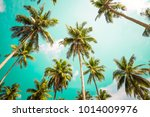 beautiful coconut palm trees... | Shutterstock . vector #1014009976