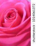 macro flower in closeup   red... | Shutterstock . vector #1014061372