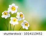 bright and colorful flowers of... | Shutterstock . vector #1014113452