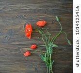 red poppy flowers on black...   Shutterstock . vector #1014125416