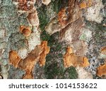 tree trunk zoom in texture for... | Shutterstock . vector #1014153622