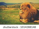 matte vintage. background.... | Shutterstock . vector #1014288148