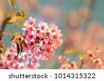 cherry blossom or sakura in... | Shutterstock . vector #1014315322