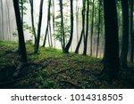 natural woods landscape with... | Shutterstock . vector #1014318505