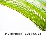 Detail Of Green Palm Tree...