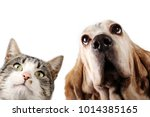 cat and dog on white background | Shutterstock . vector #1014385165