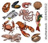 vector illustration background  ... | Shutterstock .eps vector #1014421012