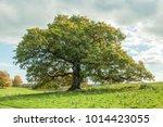 oak tree in a meadow. | Shutterstock . vector #1014423055