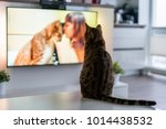 cat watching tv program about... | Shutterstock . vector #1014438532