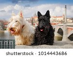 scottish terrier  black and... | Shutterstock . vector #1014443686