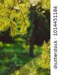 beautiful greenery as a... | Shutterstock . vector #1014451186