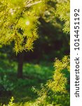 beautiful greenery as a... | Shutterstock . vector #1014451192