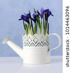watering can with spring blue... | Shutterstock . vector #1014463096