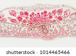 rubber leaf under the microscope | Shutterstock . vector #1014465466