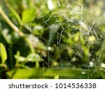 Spider Web At Grass   Grass Is...