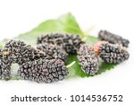 close up mulberry with green... | Shutterstock . vector #1014536752