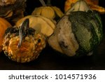 decaying gourds. end of life ... | Shutterstock . vector #1014571936